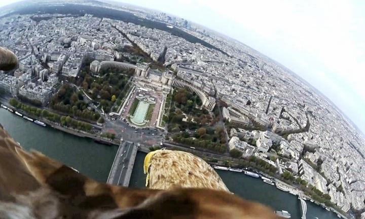 eagle view